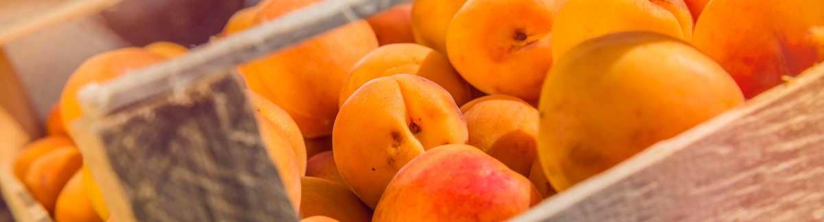 Valais apricots are here!